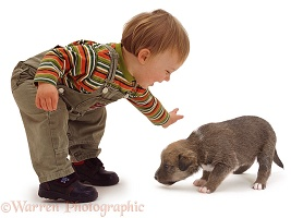 Toddler with little puppy