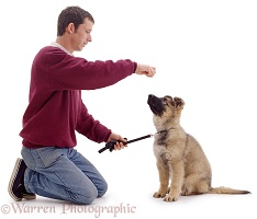 Man training Alsatian puppy