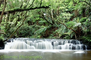 Forest waterfall in New Zealand