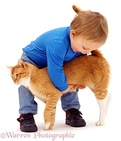 Toddler picking up ginger cat
