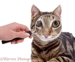 Magnifying cat's eyes