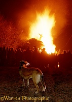 Border Collie and bonfire