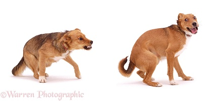 Dogs arguing
