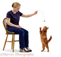Girl dangling a toy for a ginger cat