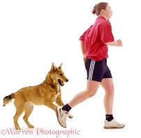 Dog chasing a runner