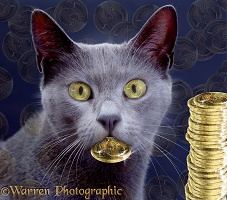 Cat with coin legend