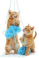 Kittens with blue wool