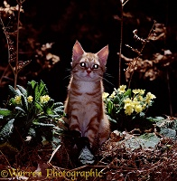 Ginger cat in night scene