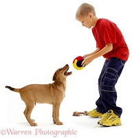 Boy playing with brown dog