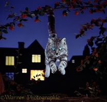 Silver Tabby cat with glowing eyes leaping at night