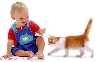 Toddler with ginger-and-white kitten