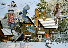 Warren House birds jigsaw