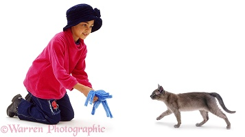 Girl beckoning a cat with a fluffy toy