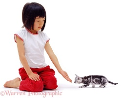 Oriental girl with silver kitten