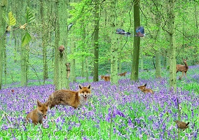 Bluebell woods jigsaw