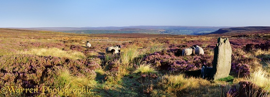 North York Moors panorama