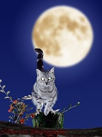 Silver tabby cat with glowing eyes and moon