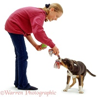 Girl and puppy playing tug-o-war