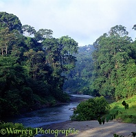 Danum Valley scene