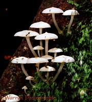 Luminous Fungi by day