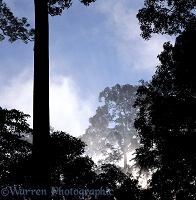 Misty Rainforest in Danum Valley