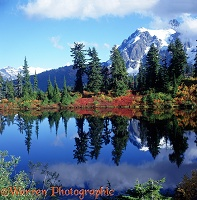 Mt. Shuksan Autumn