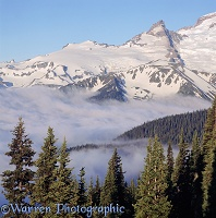 Low clouds at Mt. Rainier