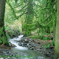 Moss-covered temperate rainforest
