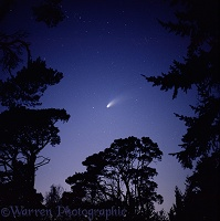 Comet Hale Bopp with silhouette trees