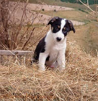 Hay-making spirit 1 - puppy sitting
