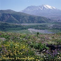 Flowers at Mt. St. Helens