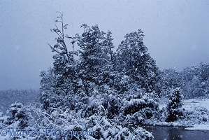 Snow at Lake Manapouri