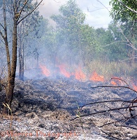 Bush fire in Queensland