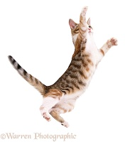 Cat leaping with outstretched arms