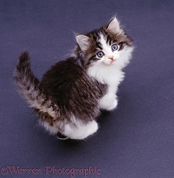 Tabby-and-white kitten looking up