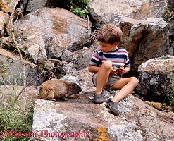 Boy sharing a biscuit with a rock hyrax