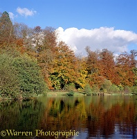 Autumnal trees and pond at Weston Wood