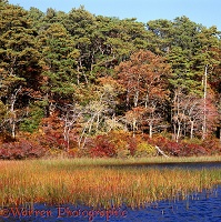 New England scenery