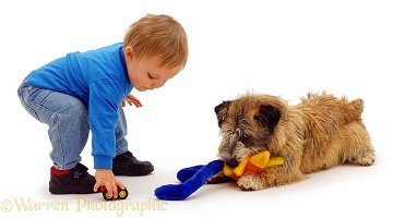 Toddler playing with terrier