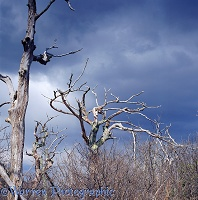 Dead trees in Shenandoah