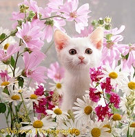 White kitten among flowers