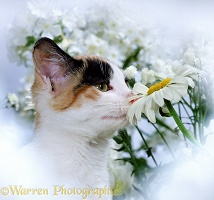Cat sniffing a flower