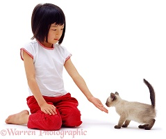 Oriental girl with kitten sniffing her hand