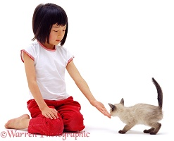 Oriental girl with kitten sniffing hand
