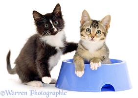 Kittens in a bowl