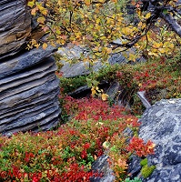 Colourful plants and layered rocks