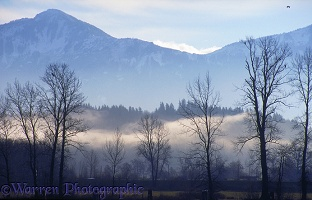 Misty scene in Fraser Valley