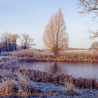 Frosty scene with frozen pond