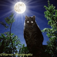 Tabby cat at night with eyes reflecting