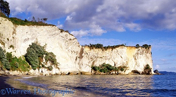 Sandstone cliffs in New Zealand